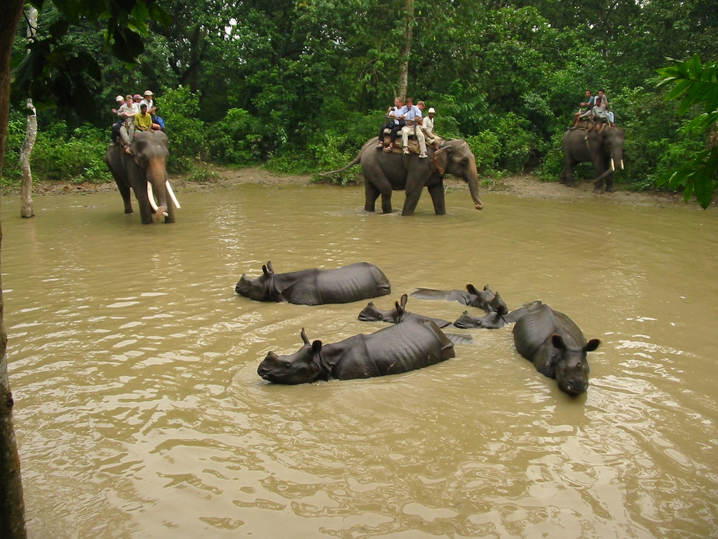 Chitwan Jungle Package Tour - 2 Nights 3 Days
